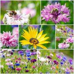 Sommer-Collage mit Kornblumen und Bienen :)