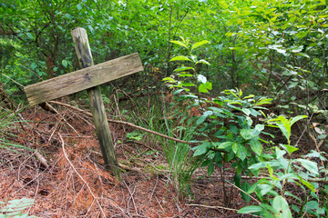 Grave in the forest