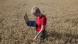 Agricultural expert inspect wheat quality using laptop, agronomy