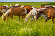 Horses eat a green grass on a summer meadow