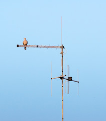 TV antenna with a bird