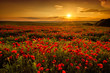 Leinwanddruck Bild - Poppy field at sunset