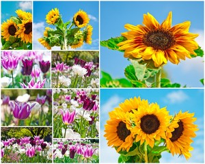 Blumen-Collage