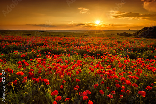 Leinwanddruck Bild Poppy field at sunset