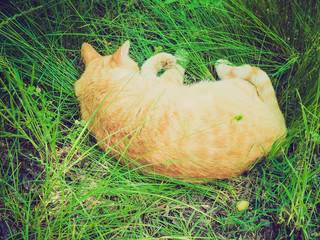 Retro look Cat in the grass