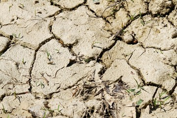 soil without water during the DROUGHT in the country