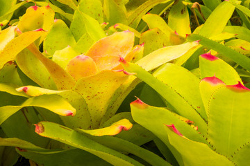 Bromeliad treetop
