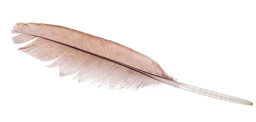 light brown straight feather on white