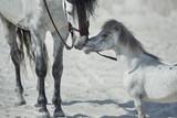 Fine scene of the two hugging horses
