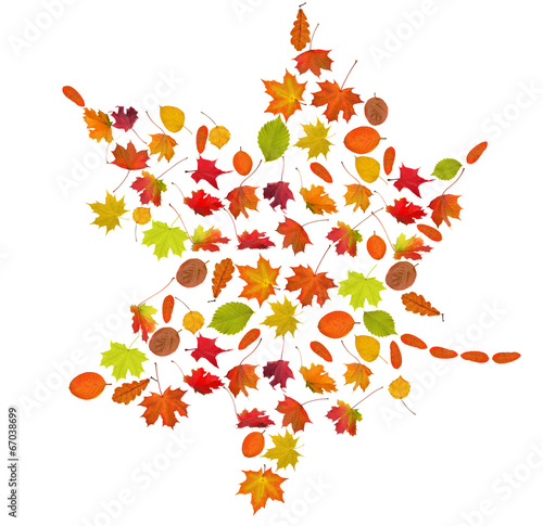 compound fall maple leaf on white