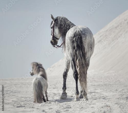 Zdjęcia na płótnie, fototapety na wymiar, obrazy na ścianę : Great shot of the two horses