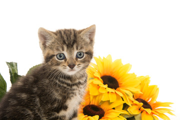 Cute tabby kitten and flowers