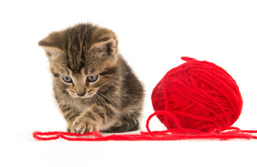Cute tabby kitten and yarn