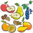 set of fruits, apple, pear, mango, orange,  vector