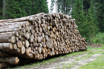 logs cut by loggers in the mountains 1