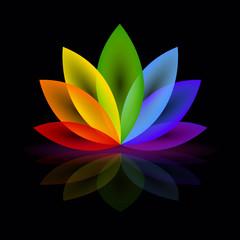 lilie regenbogenfarben