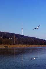 Fernsehturm von Dresden an der Elbe