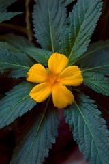 Einzelne gelbe Blüte