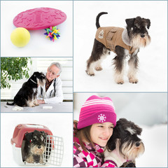 Dog care collage