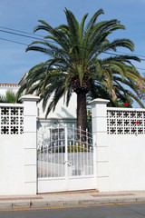 white gate and palm