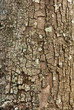 tree bark closeup usable as texture or background