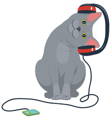 gray cat listening to music on headphones