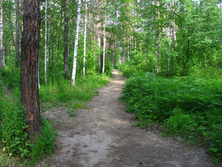 Path in a mixed forest. Summer landscape