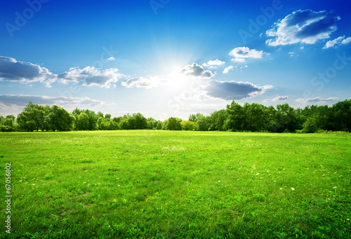 Foto op Canvas Weide, Moeras Green grass and trees