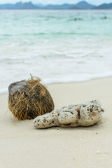 shell ,coral and coconut on beach