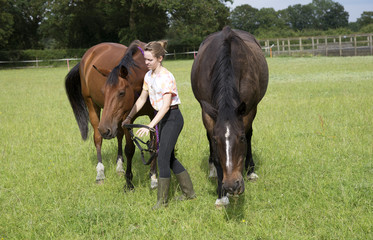 Young teenage rider bringing her ponies from a field