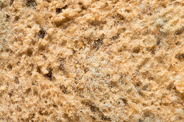 mold on bread. macro