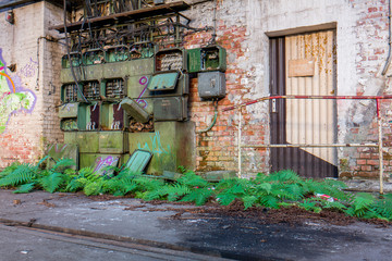 Vegetation DDR Fabrikhalle