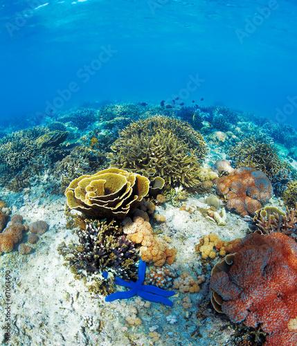 Fotobehang Koraalriffen Underwater landscape