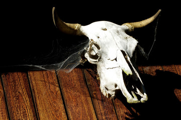 bull skull backgrounds