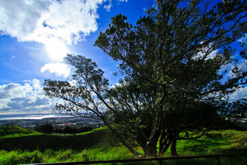 Tree at auckland's Mount Eden New Zealand