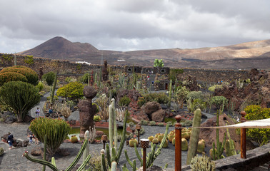 View of cactus garden , Lanzarote, Canary Islands (Spain)