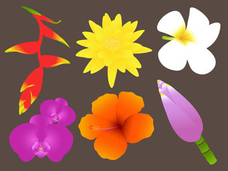 Colorful Tropical Flowers Set