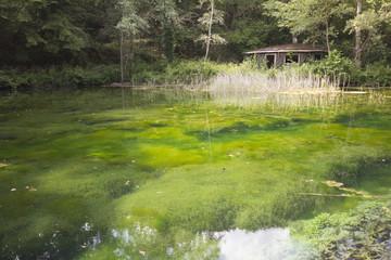 Casa sul lago dai riflessi verdi
