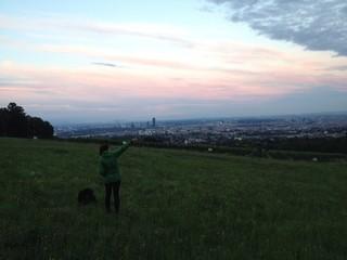 Wien Wiese mit Aussicht