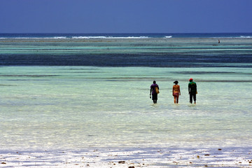 seaweed and people in zanzibar