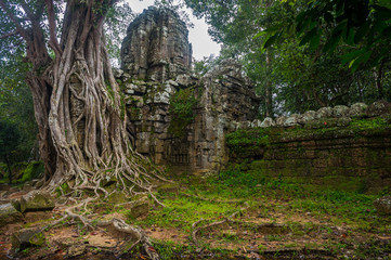 giant banyan tree at Angkor Wat