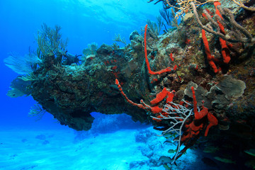 Colorful tropical coral reef in the caribbean sea