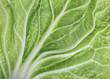 green leaf cabbage texture background