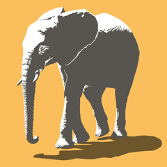 African Elephant Vector Illustration, two color mode