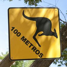 Kangaroo warning traffic sign