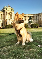 Hund vor Hofburg