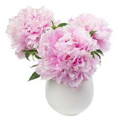 Pink peony flowers, isolated on white background