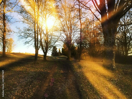 canvas print picture Sunny day in autmn forest