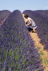 Woman sitting in floral field of lavender