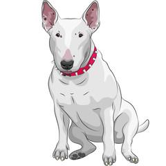vector cartoon Bull Terrier Dog breed sitting